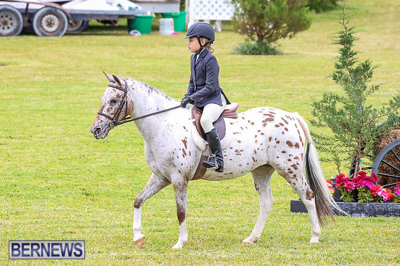 RES-Spring-Horse-Show-Series-Bermuda-March-11-2017-25