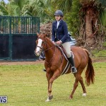 RES Spring Horse Show Series Bermuda, March 11 2017-82