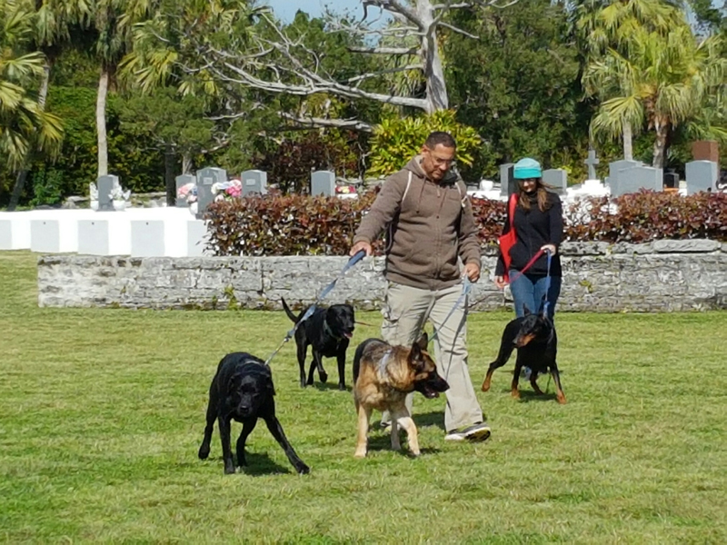 SPCA-Paws-To-The-Park-Bermuda-March-5-2017-1