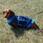 SPCA Paws To The Park Bermuda March 5 2017 (13)