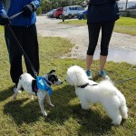 SPCA Paws To The Park Bermuda March 5 2017 (17)