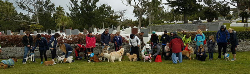 SPCA-Paws-To-The-Park-Bermuda-March-5-2017-19