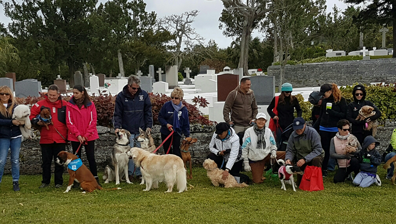 SPCA-Paws-To-The-Park-Bermuda-March-5-2017-22