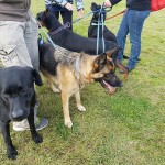 SPCA Paws To The Park Bermuda March 5 2017 (3)