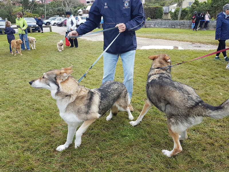 SPCA-Paws-To-The-Park-Bermuda-March-5-2017-4