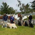 SPCA Paws To The Park Bermuda March 5 2017 (7)