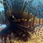 11th Hour Lionfish Cookoff April 2017 Bermuda (3)
