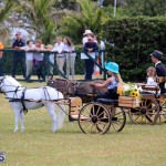 Ag Show Bermuda April 21 2017 2 (22)
