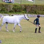 Ag Show Bermuda April 21 2017 2 (24)
