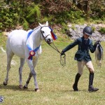 Ag Show Bermuda April 21 2017 2 (26)