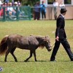Ag Show Bermuda April 21 2017 2 (34)