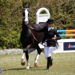 Ag Show Bermuda April 21 2017 2 (38)