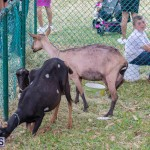 AgShow Day 3 Bermuda April 22 2017 (45)