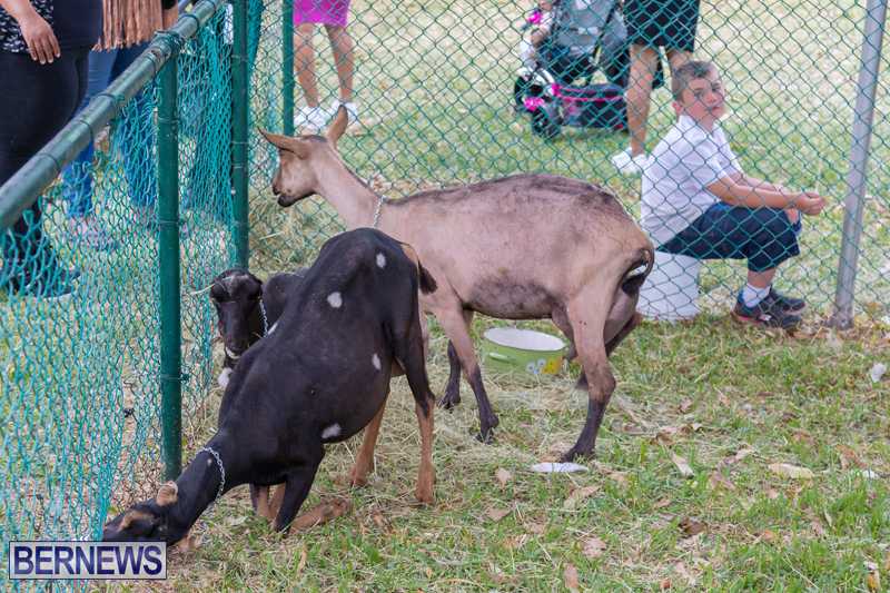 AgShow-Day-3-Bermuda-April-22-2017-45