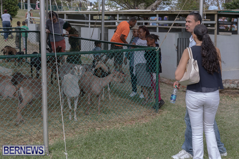 AgShow-Day-3-Bermuda-April-22-2017-47