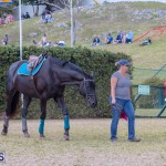 AgShow Day 3 Bermuda April 22 2017 (49)