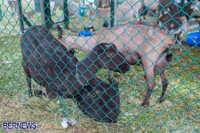 AgShow-Day-3-Bermuda-April-22-2017-53
