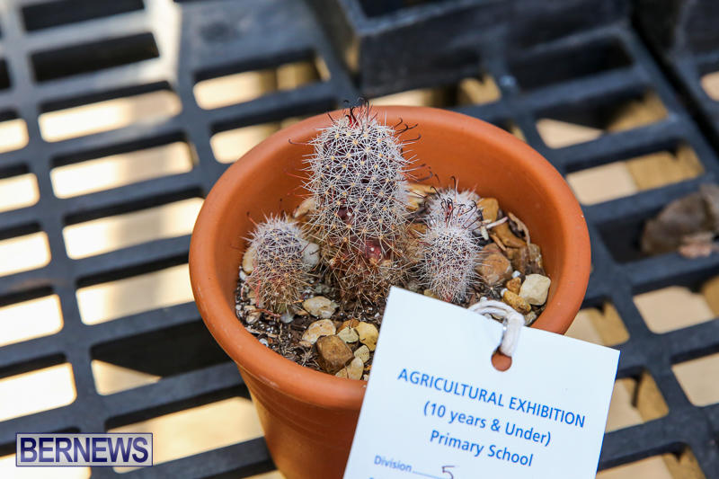 Agricultural-Show-Bermuda-April-19-2017-161