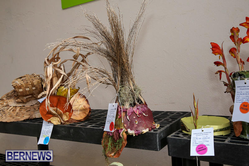 Agricultural-Show-Bermuda-April-19-2017-194