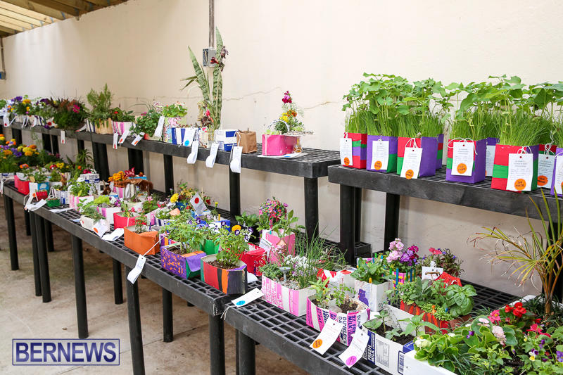 Agricultural-Show-Bermuda-April-19-2017-225