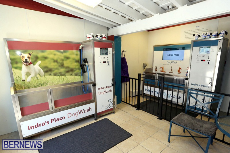 New self service dog wash business opens bernews indras place dog wash bermuda april 2017 1 indras place self solutioingenieria Gallery