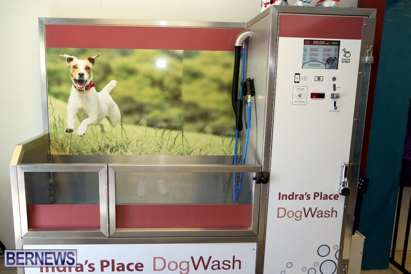 New self service dog wash business opens bernews indras place dog wash bermuda april 2017 2 solutioingenieria Gallery