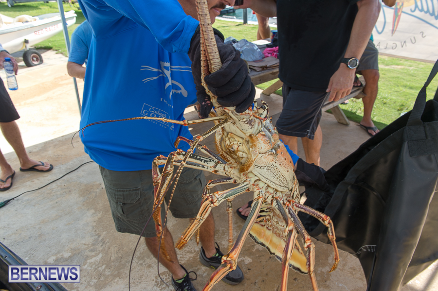 Makin-Waves-Lobster-Tournament-Bermuda-2014-02