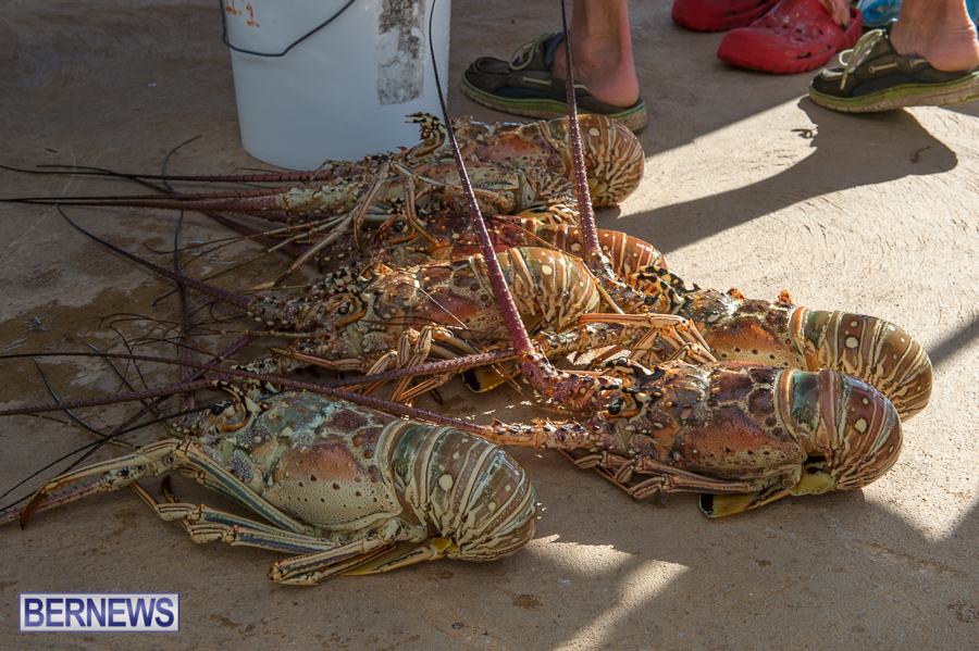 Makin-Waves-Lobster-Tournament-Bermuda-2014-17