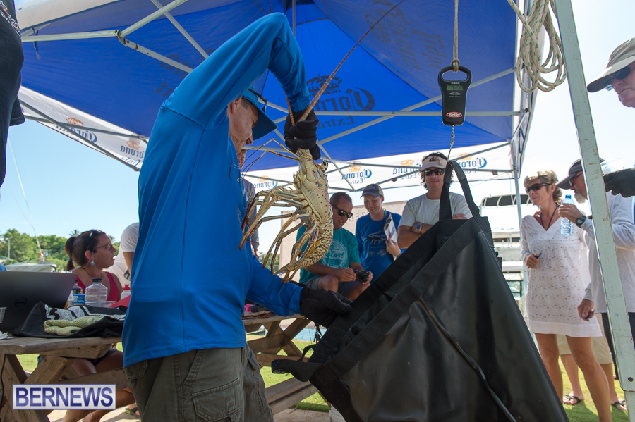 Makin-Waves-Lobster-Tournament-Bermuda-2014-18