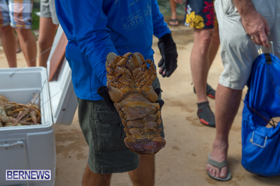 Makin-Waves-Lobster-Tournament-Bermuda-2014-30