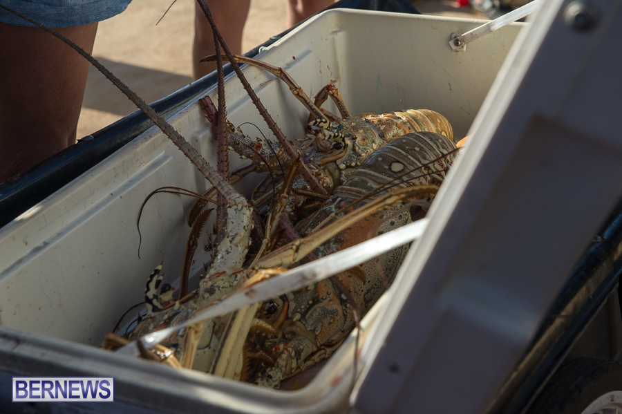 Makin-Waves-Lobster-Tournament-Bermuda-2014-59