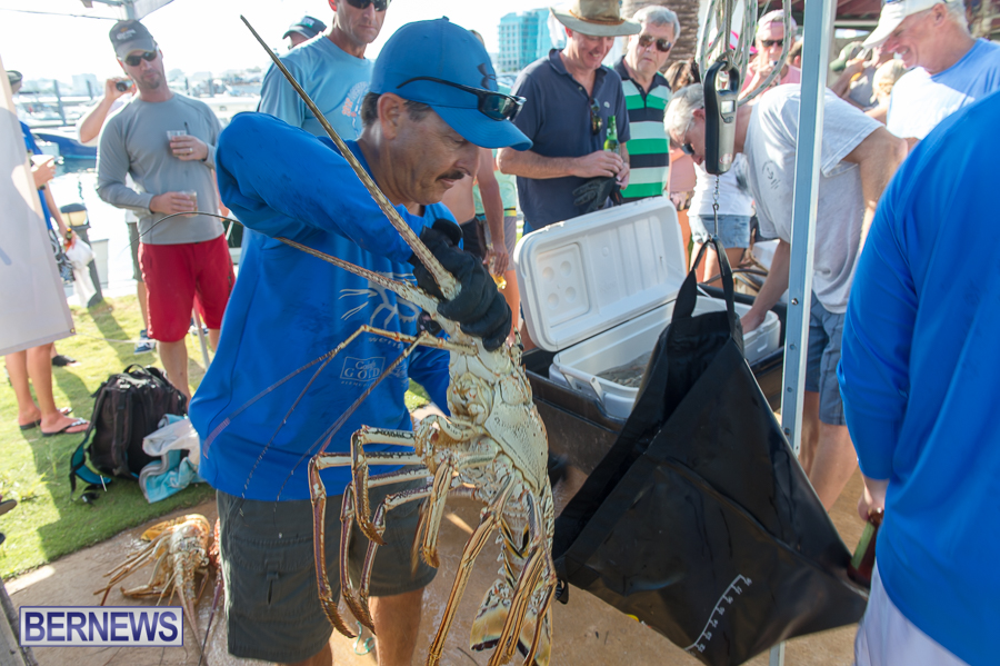 Makin-Waves-Lobster-Tournament-Bermuda-2014-62