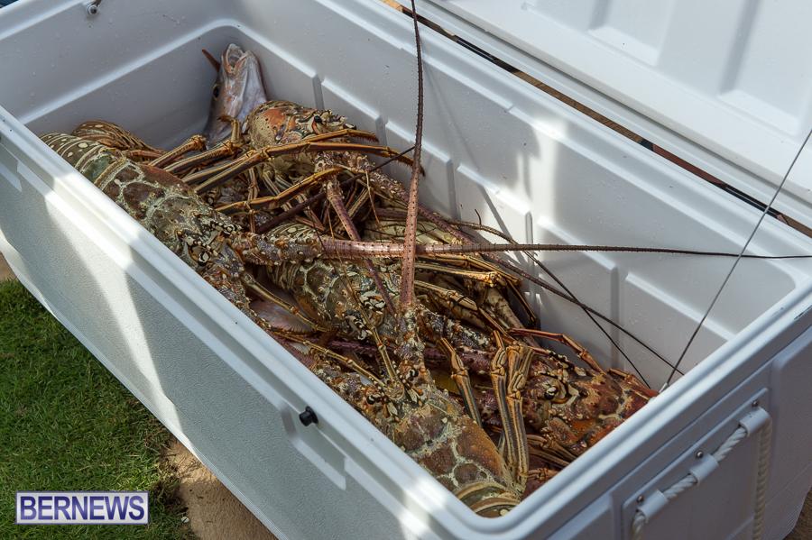 lobster in cooler bermuda generic