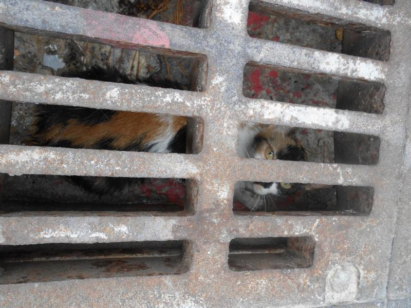 cat rescued in st geo 2017 (1)fw