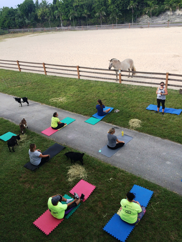 Goat Yoga Bermuda Oct 5 2017