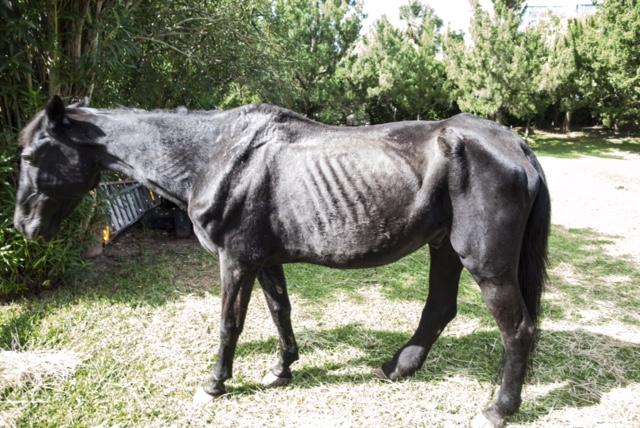 Horses Bermuda Oct 23 2017 (3)