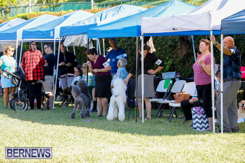 International-Dog-Show-Bermuda-October-21-2017_8082