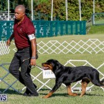 International Dog Show Bermuda, October 21 2017_8083