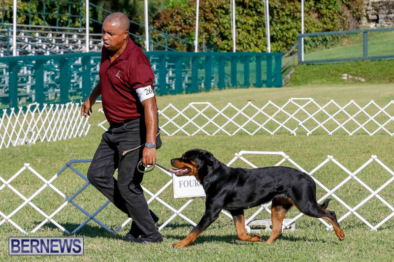 International-Dog-Show-Bermuda-October-21-2017_8083