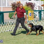 International Dog Show Bermuda, October 21 2017_8085