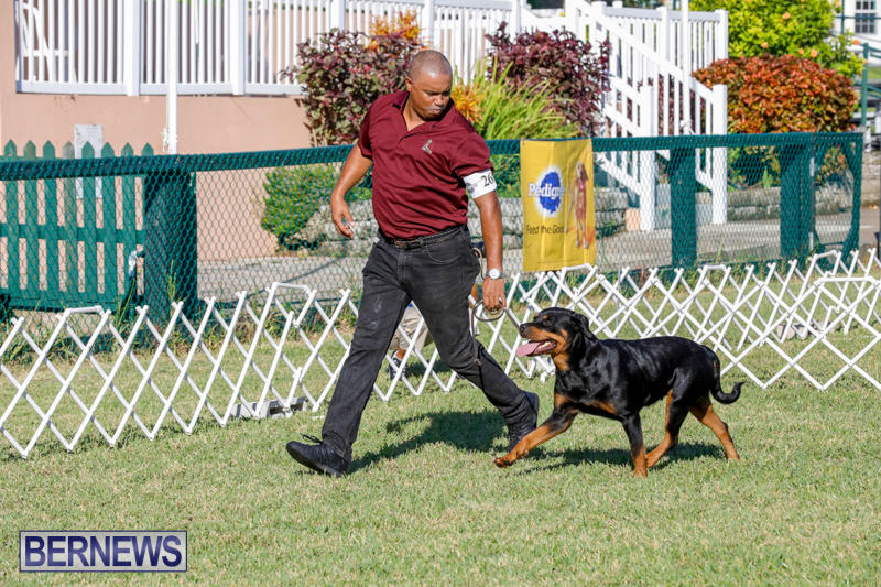 International-Dog-Show-Bermuda-October-21-2017_8085