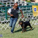 International Dog Show Bermuda, October 21 2017_8089