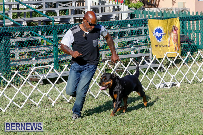 International-Dog-Show-Bermuda-October-21-2017_8089