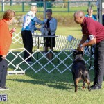 International Dog Show Bermuda, October 21 2017_8095