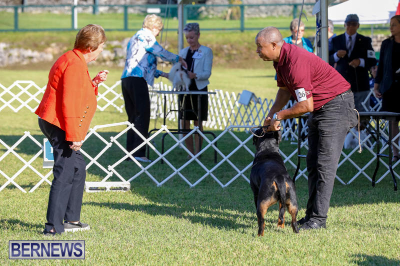 International-Dog-Show-Bermuda-October-21-2017_8095