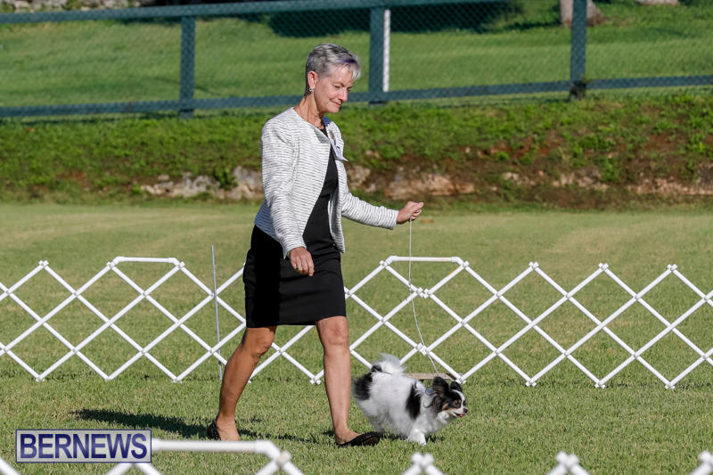 International-Dog-Show-Bermuda-October-21-2017_8097