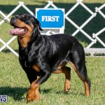 International Dog Show Bermuda, October 21 2017_8103