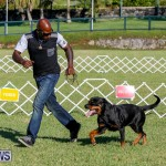 International Dog Show Bermuda, October 21 2017_8125