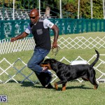 International Dog Show Bermuda, October 21 2017_8134