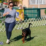 International Dog Show Bermuda, October 21 2017_8152